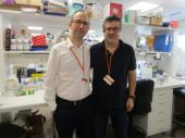 S'identifica un nou fàrmac per tractar de forma combinada un dels principals tipus de càncer de pulmó