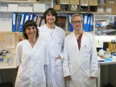 Investigadors del Programa ProCURE de l'ICO identifiquen una nova diana terapèutica per combatre la metàstasi en càncer d'ovari