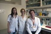 Investigadors de l'ICO-IDIBGI descobreixen un nou mecanisme antienvelliment de la metformina